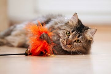 Choosing the best toys for your pets