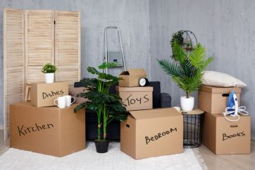 Move house without damaging your plants