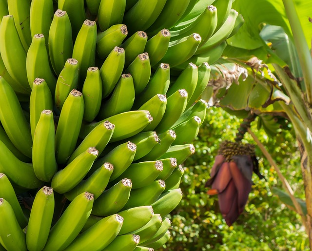 What To Do With The Banana Plant
